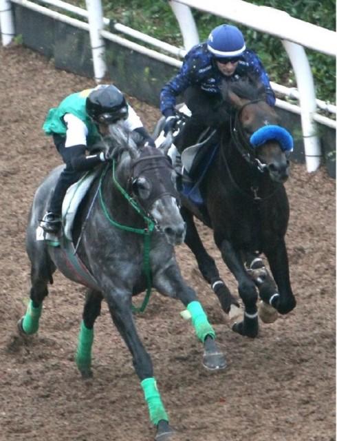 右レコンダイトと左クランモンタナは併せ馬で追い切り(撮影:日刊ゲンダイ)