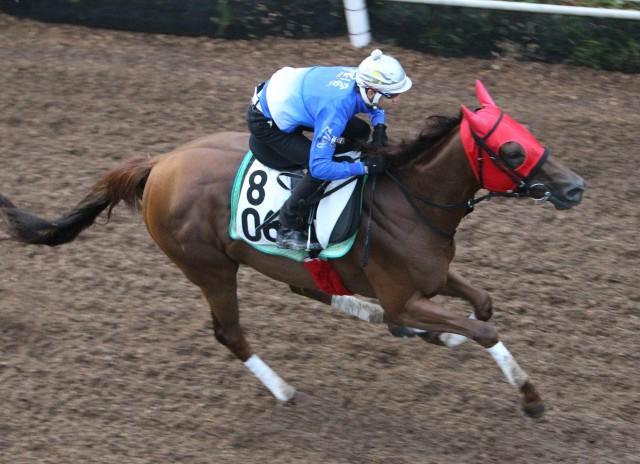 追い切りでも松山騎手が跨ったコーリンベリー(撮影:日刊ゲンダイ)