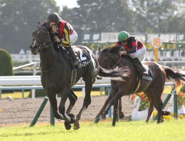 黄菊賞を勝ったバティスティーニも次走はホープフルSを予定(撮影:日刊ゲンダイ)