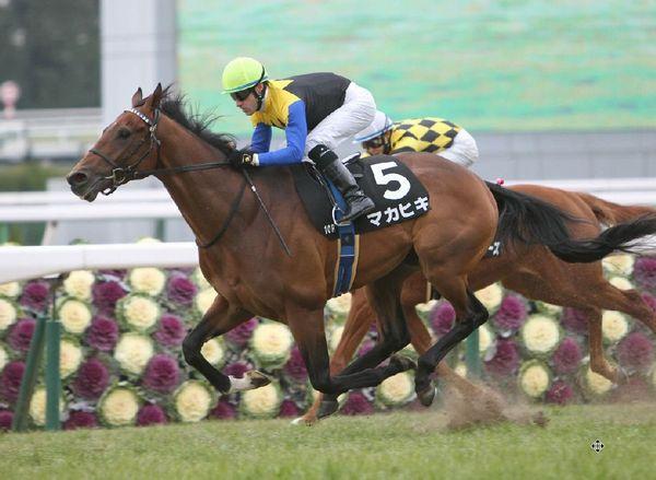 日本ダービー 出走馬紹介・マカヒキ | 競馬専門紙「優馬」