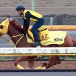 重賞連勝を目指すアンタレスSの勝ち馬アナザートゥルース(撮影:日刊ゲンダイ)